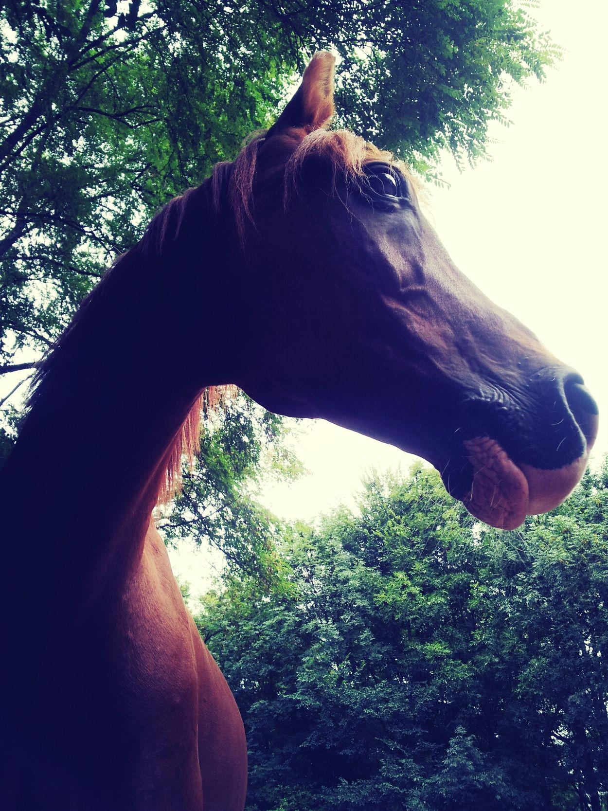 My Love❤ Horses Horse Bestes Pferd