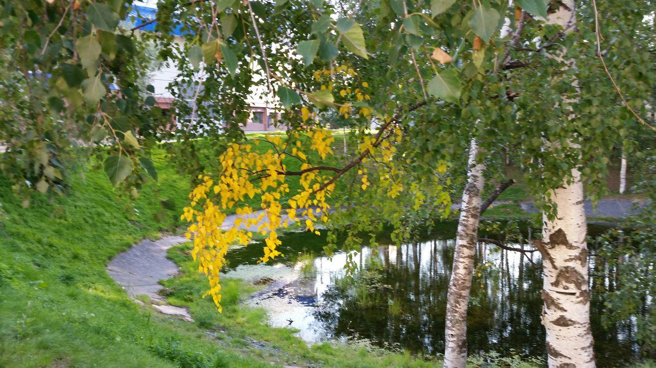Началось ((( August Nature Siberia август августпрелесть 😢 сибирь Природа осеньчтоли осеньмля летонеуходи
