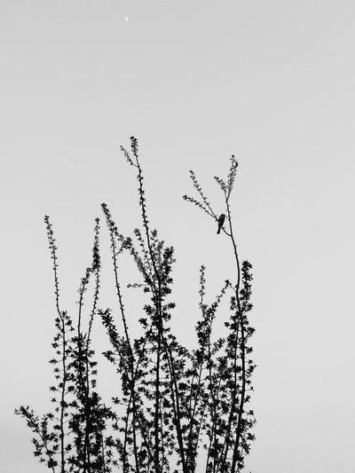 【peace】 Black & White Smartphonephotography