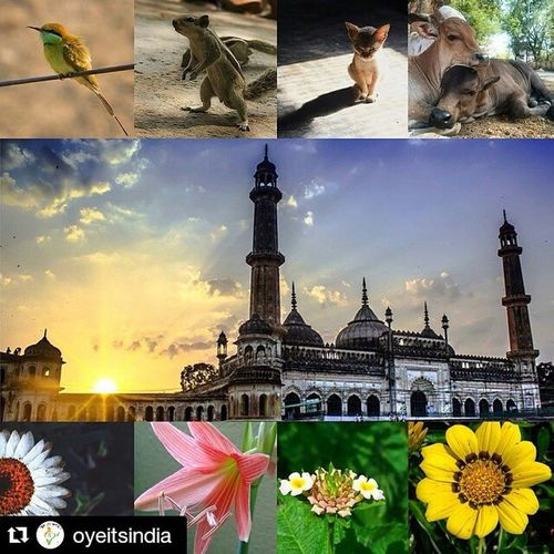 Thanks @oyeitsindia for featuring my image...... Repost @oyeitsindia ・・・ Photographers Of India & Their Extreme Photography. Amazing Pictures Clicked Across India. ••••••••••••••••••••••••••••••••••••••••••••••••• 🔱 OYEITSINDIA ! PRESENTS 🔱 🔱 IG OF THE DAY 🔱 --------------------------------- 🔱 CONGRATULATIONS 🔱 --------------------------------- Oye ! It's India 🔝 Recommended Artist. --------------------------------- 📆 Date : 31/05:15 🔘Feature No : 473 --------------------------------- 👤 Picture By 📷✨ : @meet_mewada @monakar.vishal @_theanimelover_ @jay_shiurkar @harshit_photographe @meerarajput @s33m4n41du @senthilkumar.03 @dubeyashok9 ----------------------------------- Visit Their Beautiful Gallery. 📷🌟✨ Fill Their Hearts With Motivation. ------------------------------------ Hashtag Used Oyemyclick Every Saturday We Will Select All The Pictures From This Following Hashtag. Oyemyclick One Hashtag For Everyone. ------------------------------------- Lyoyemyclick