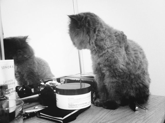 """Mosu latest habit for evening ONLY: looking in the mirror at himself, is doing this every night (from a lot of nights ago so is not my imagination :))) Mosu """"Erim"""""""