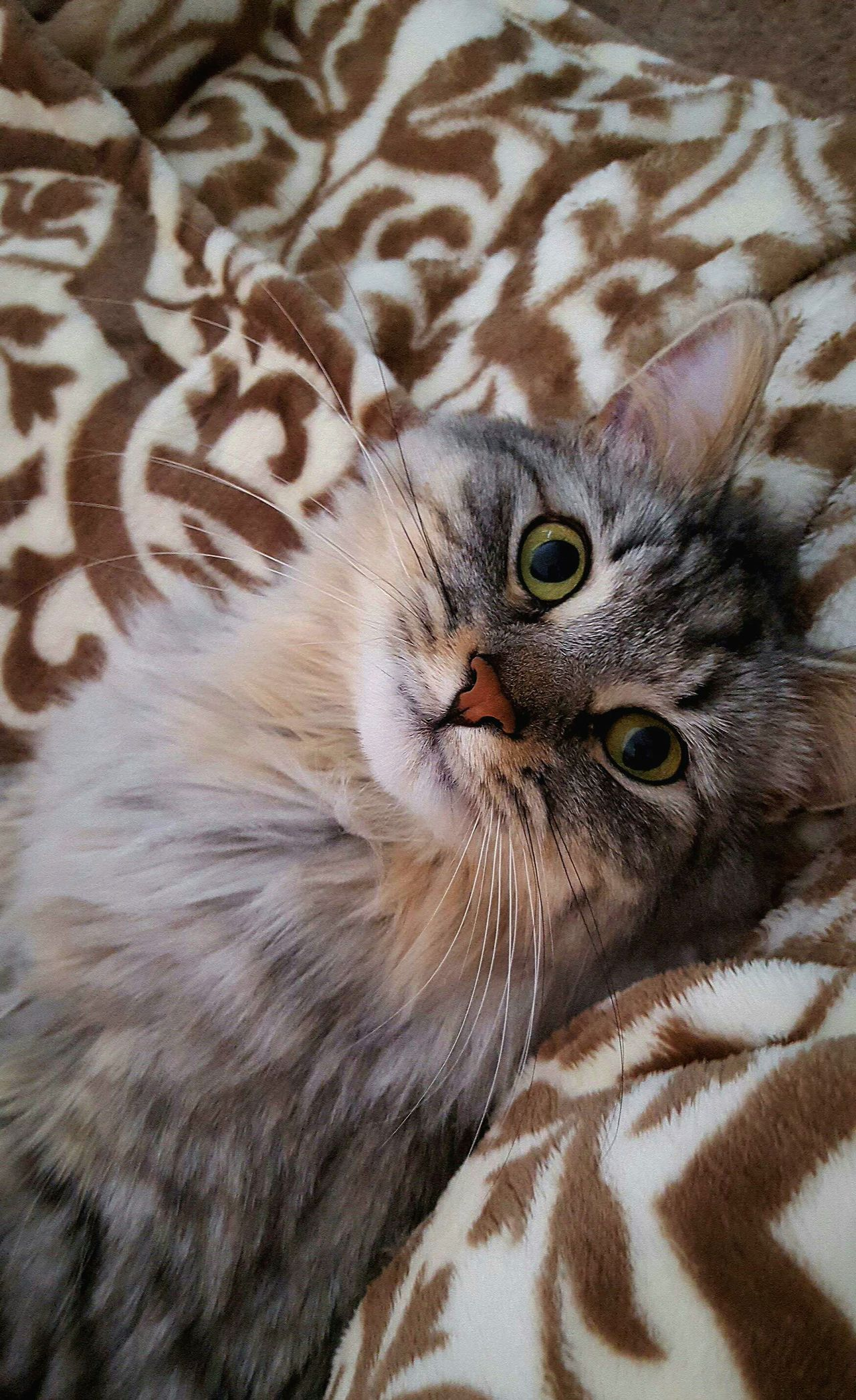 The beautiful Louise First Eyeem Photo Cat Meow Big Eyes Cats Of EyeEm Cats Maine Coon Green Eyes The Cats Meow Little Lady  Tell Me Im Pretty. Whiskers Whiskerwednesday