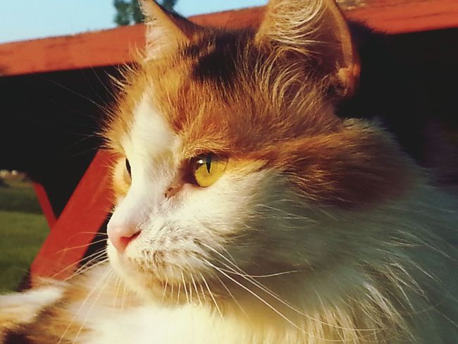 Taking Photos Phyllis My Granny Cat Of 18ten My Photography Cat Lovers