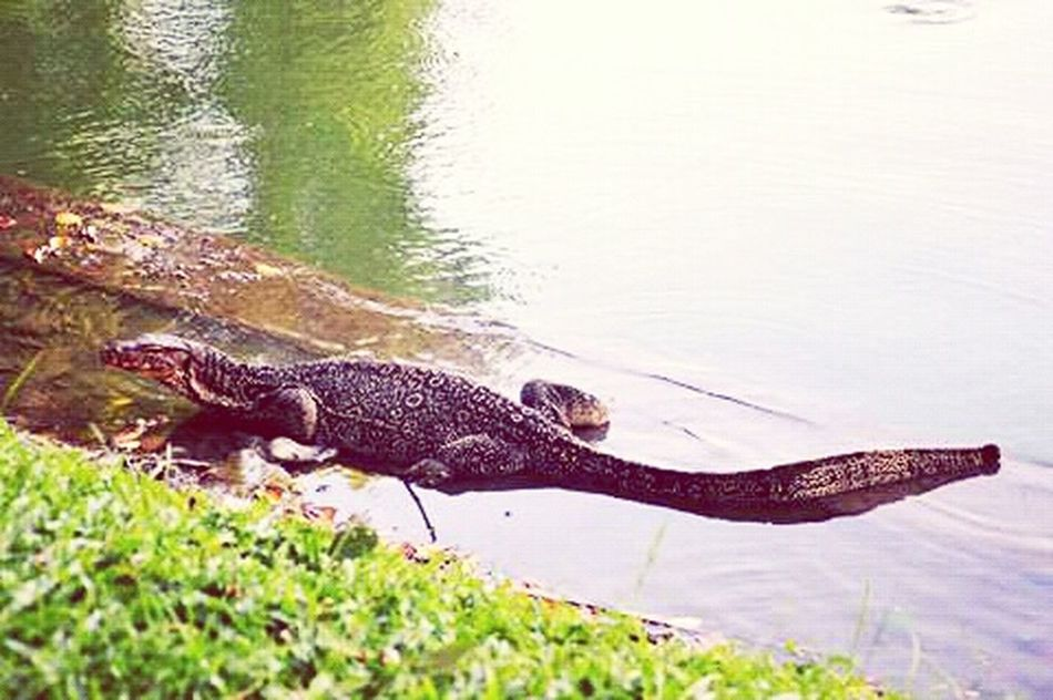 Bangkok Tailand Lumpini Park Lake Varan