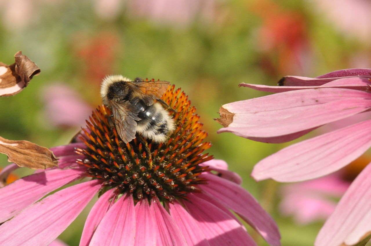 Bumblebee Flower Nateral Pink Republic Of Bashkortostan Summer Башкирия Природа цветок  шмель