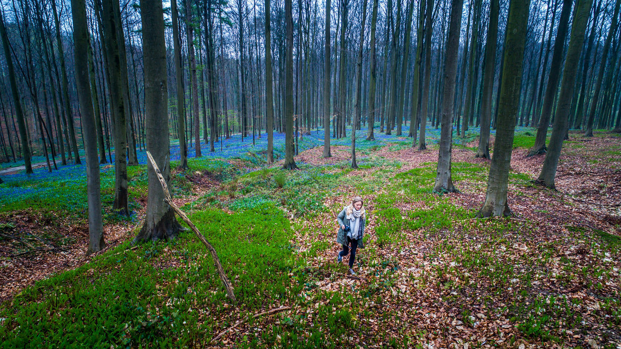 Adult Adults Only Beauty In Nature Day Drone  Dronephotography Forest Full Length Grass Growth Hallerbos Hiking Landscape Men Nature Outdoors People Real People Scenics Spring Tree Tree Trunk Women WoodLand