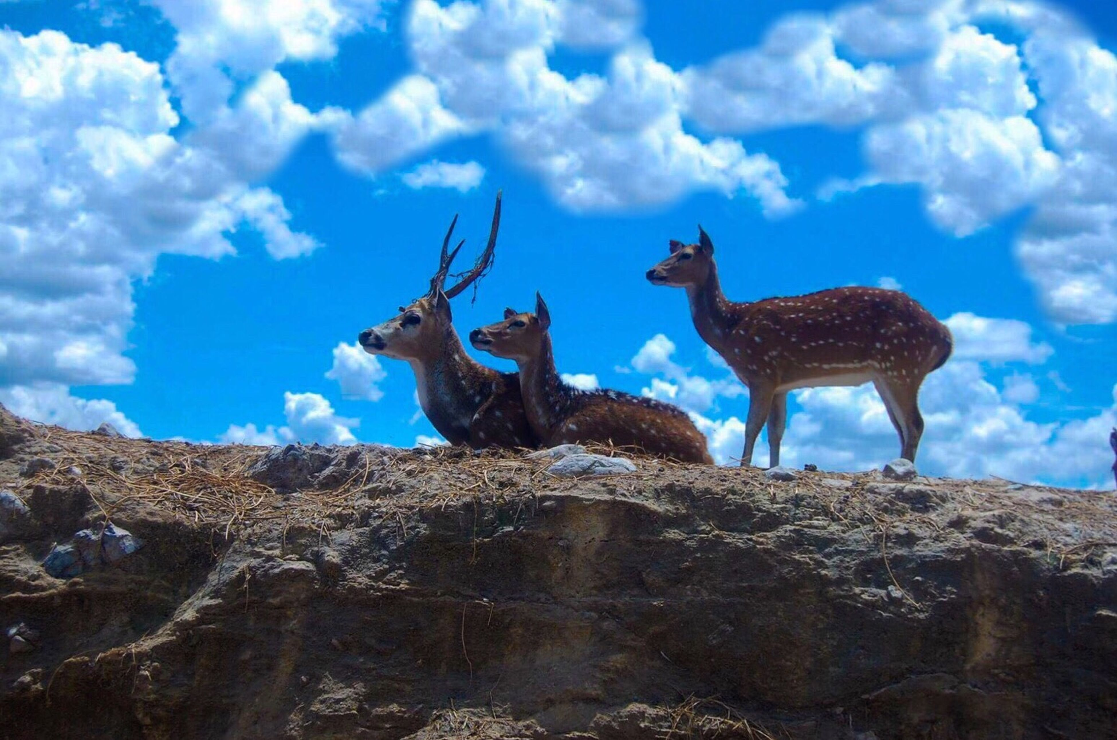 animal themes, sky, cloud, low angle view, blue, cloud - sky, mammal, domestic animals, tranquility, day, outdoors, nature, zoology, tranquil scene, livestock, mountain, non-urban scene, no people, scenics, solitude