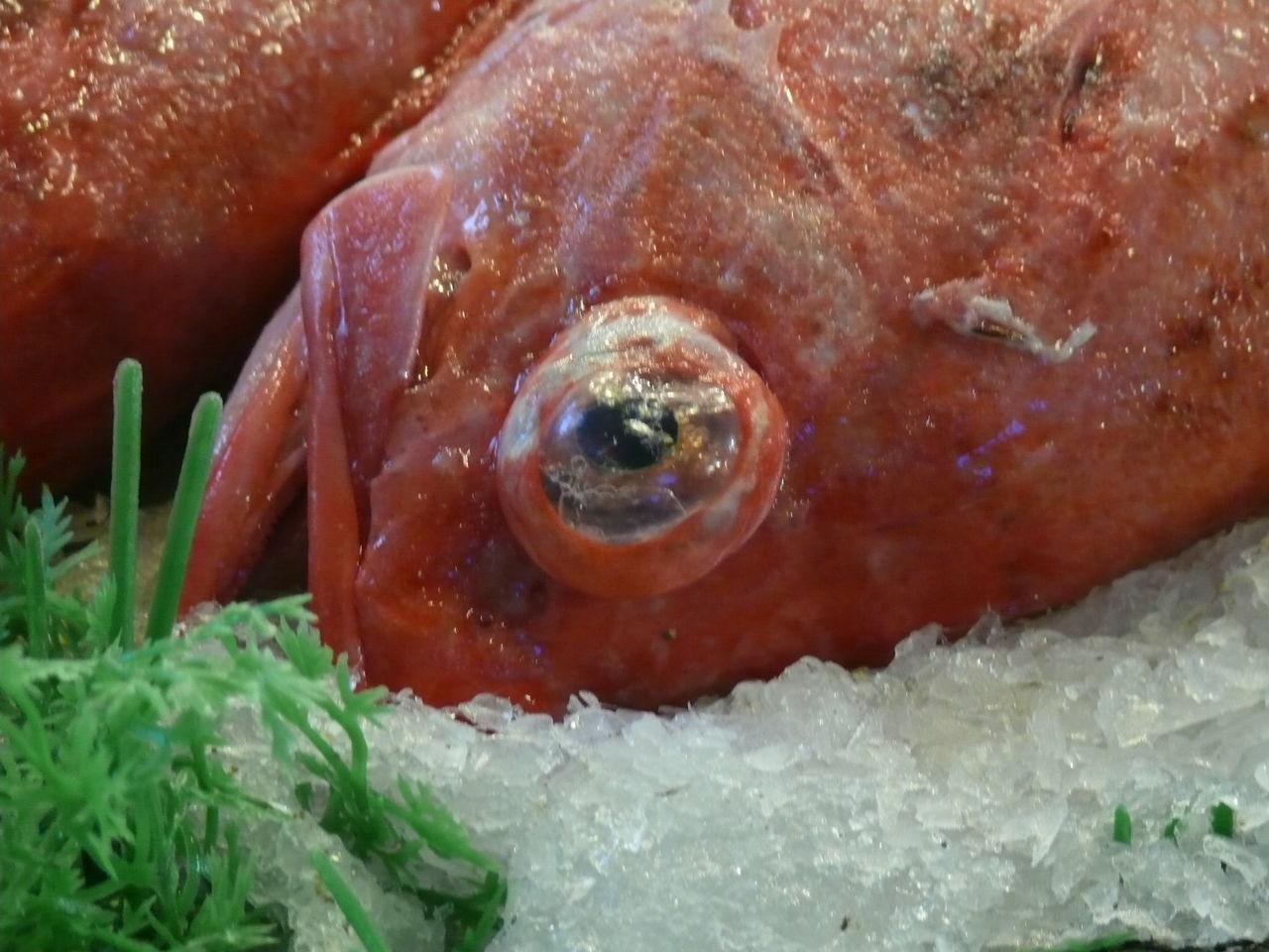 Fish Fish Market Fisheye FishEyeEm Deadfish Pink Tactile Punctum Gaze Showcase April Nature's Diversities