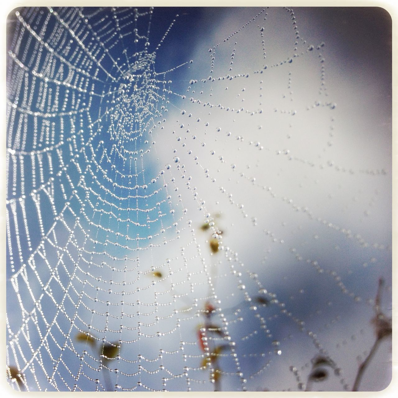 Low Angle View Of Wet Spider Web Against Sky