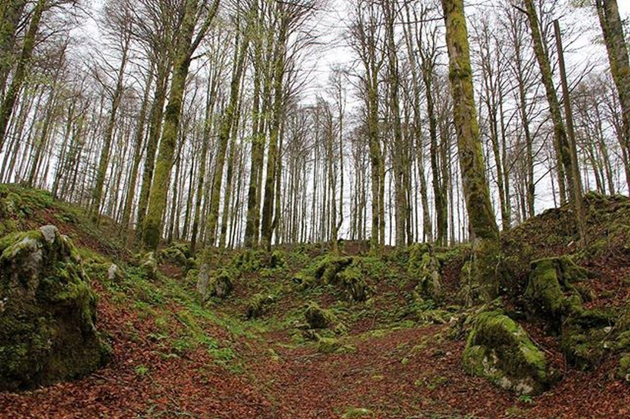 Bosco Trees Alberi Pyll Landscape Landscapescapture Muschio