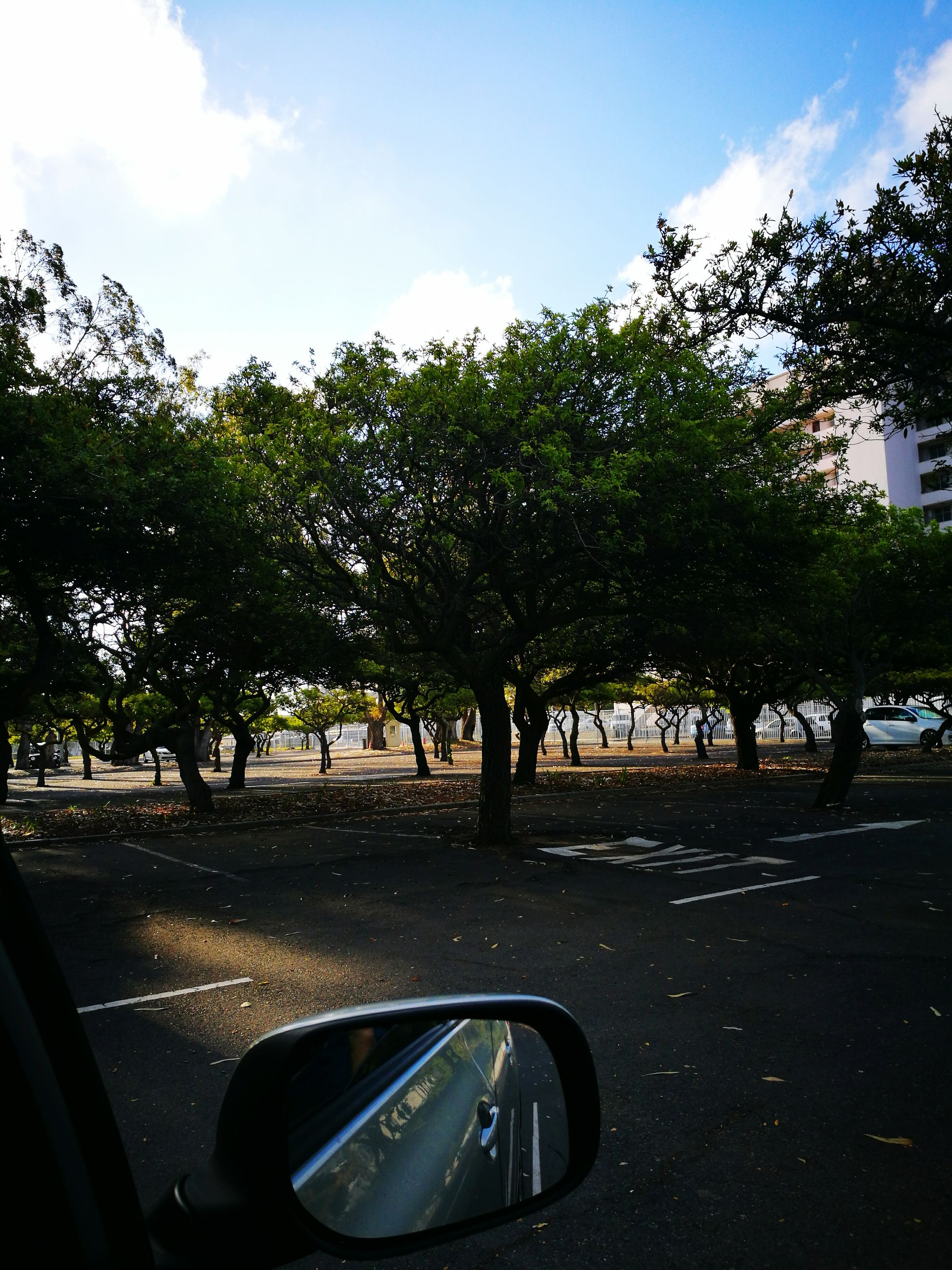 Parking Lot Trees Trees And Sky Evening Work Outdoors End Of Day Nature Nature Photography Forrest