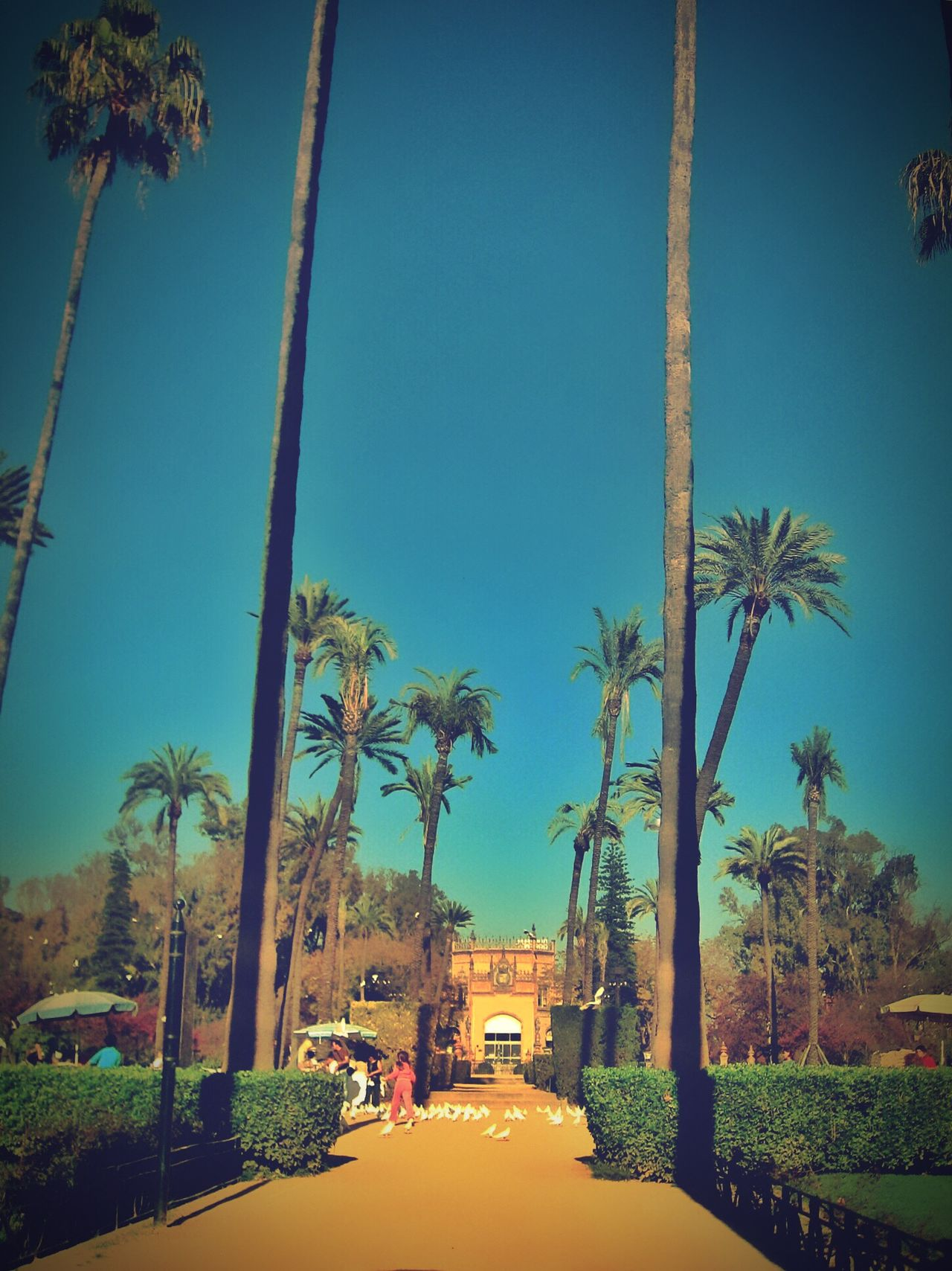 Poster It. Late post taken in Sevilla Spain. Urban Landscape Photography Poster It Palm Trees Sunny Blue Sky Clear Sky SPAIN Landscape Vertical Symmetry People Birds Calm