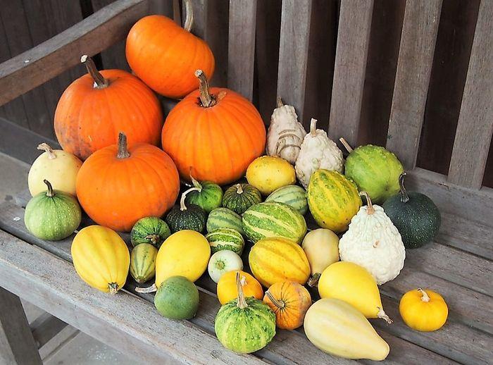 No People Oita Oga Farm Pumpkin Squash - Vegetable Vegetable Wood - Material