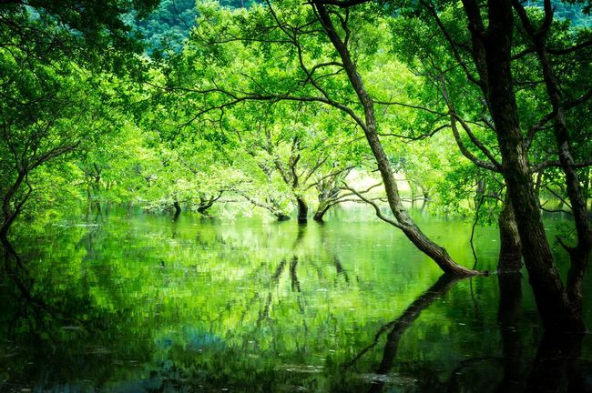 Japan Tranquil Scene Landscape Majestic Tree Tranquility Forest Scenics Lake Non-urban Scene Growth Tree Trunk Nature Beauty In Nature Branch Auto Post Production Filter WoodLand Water Green Idyllic Tourism
