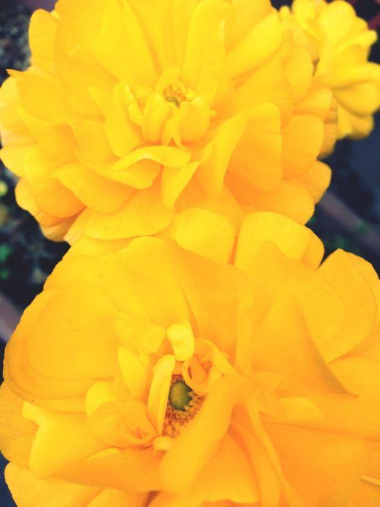 Yellow Beautiful Flowers Park