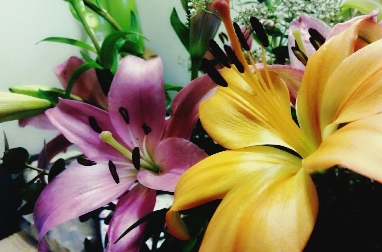 """""""Wild Thang! U make my 💖 sing"""" Flower Head Day Lily Close-up Winter 2017 Flowers Pink Lily Orange Lilly Standing Tall Simple Elegance At Home Spreading Warmth"""