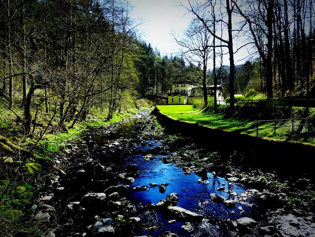 Water Tranquil Scene Stream Tranquility Scenics Tree Reflection Non-urban Scene Beauty In Nature Nature Outdoors Blue Green Color Flowing Day Oberfranken Upper Franconia Frankenwald  Höllental Hölle Bayern Canal Tree Trunk Bare Tree