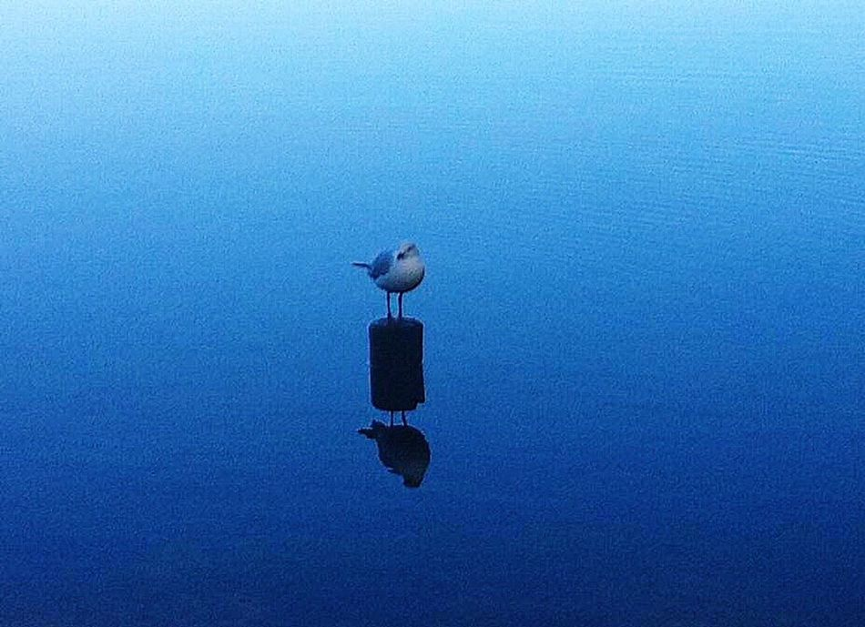 Smith's Lake Shared Moment Travels & Journeys Newsouthwales Birds Water Reflections