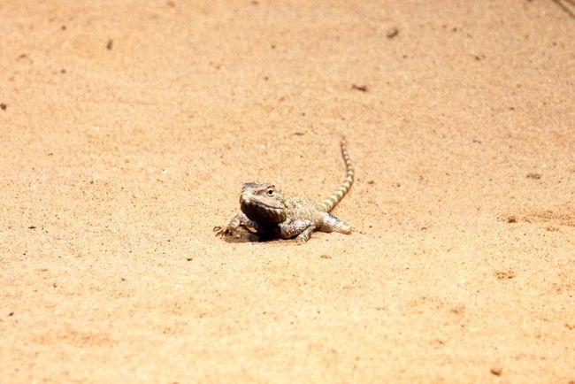 Lizzard Lizard Zoo