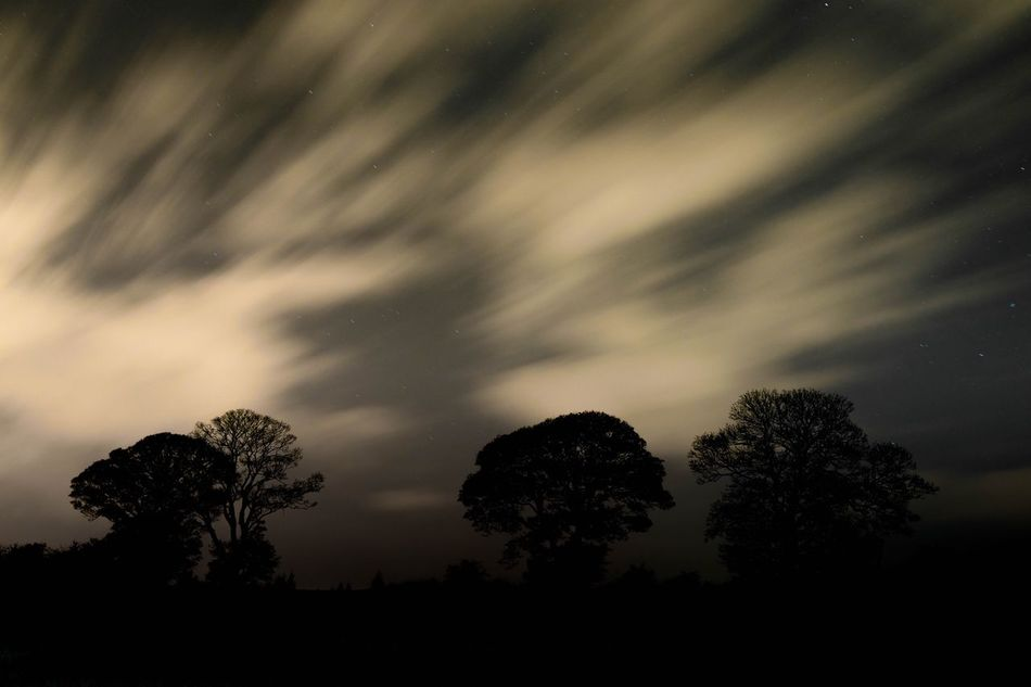 Tree Silhouette Nature Sky Beauty In Nature Tranquility Scenics No People Low Angle View Cloud - Sky Outdoors Tranquil Scene Astronomy Star - Space Day
