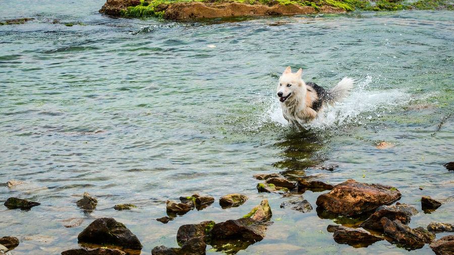 Happy dog (1) Animal Themes Beauty In Nature Bostancı Sahili Caddebostan Caddebostansahil Day Dog Domestic Animals EyeEm Best Shots Mammal Nature No People Outdoors Pets Relaxation Rock - Object Sea Tranquility Water Waves Colour Of Life