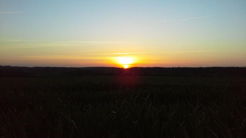 Field Grass Horizon Over Land Landscape Nature Sun Sunset Tranquility