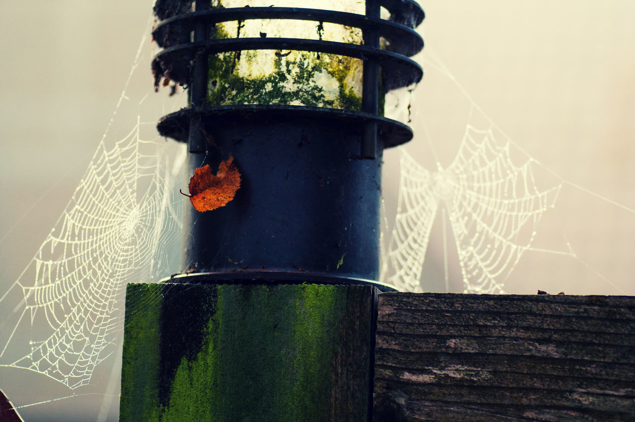Spooky Lamp Autumn Autumn Colors Close-up Dark Day Dirt Dirty Fall Fall Colors Fog Foggy Foggy Morning Garden Halloween Lamp Leaf Mist Misty Morning Moss Nature No People Outdoors Spider's Web Spidersweb Web