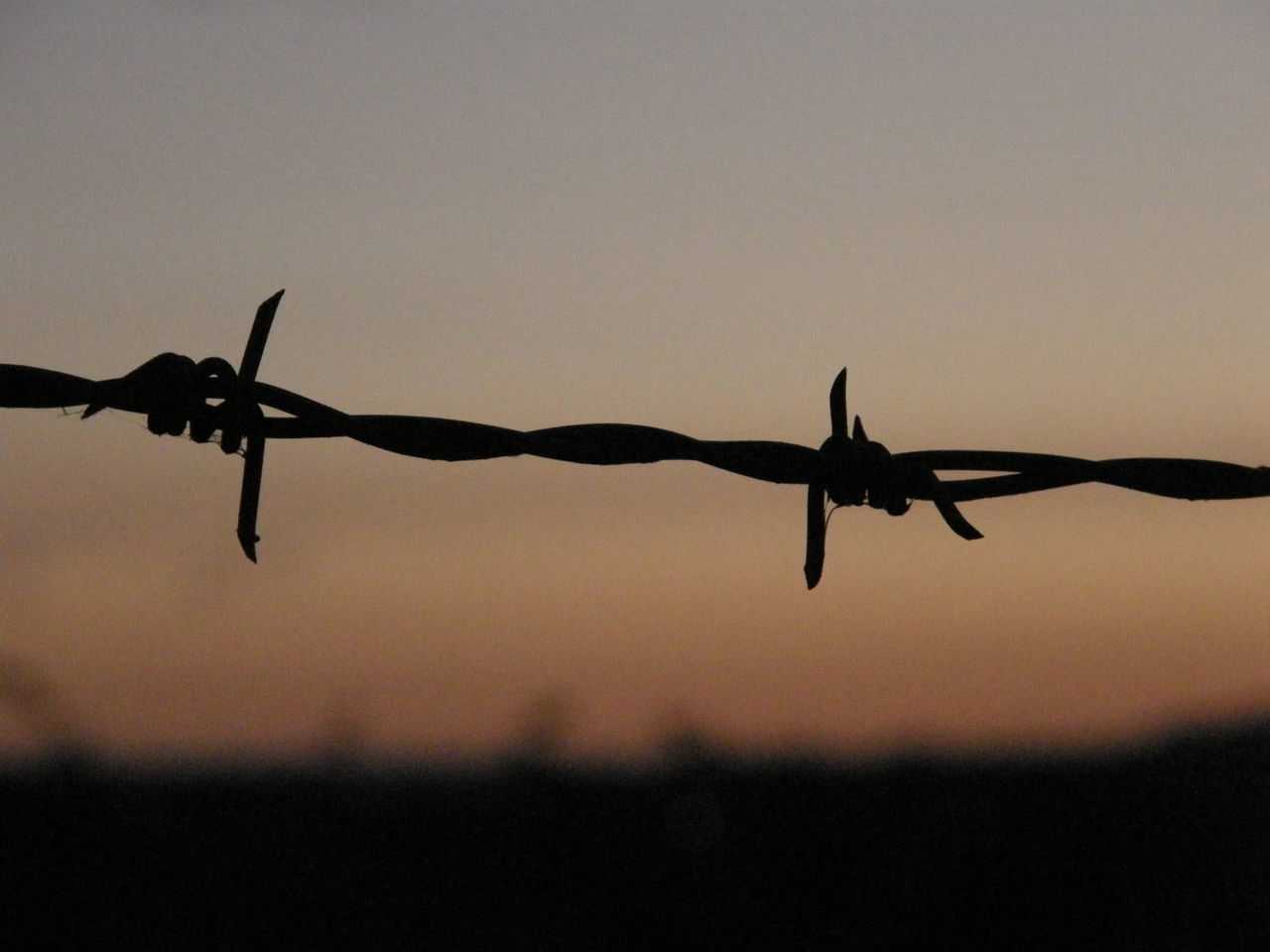 protection, barbed wire, security, safety, metal, silhouette, outdoors, razor wire, sunset, danger, spiked, close-up, focus on foreground, sky, no people, clear sky, low angle view, exclusion, day, nature