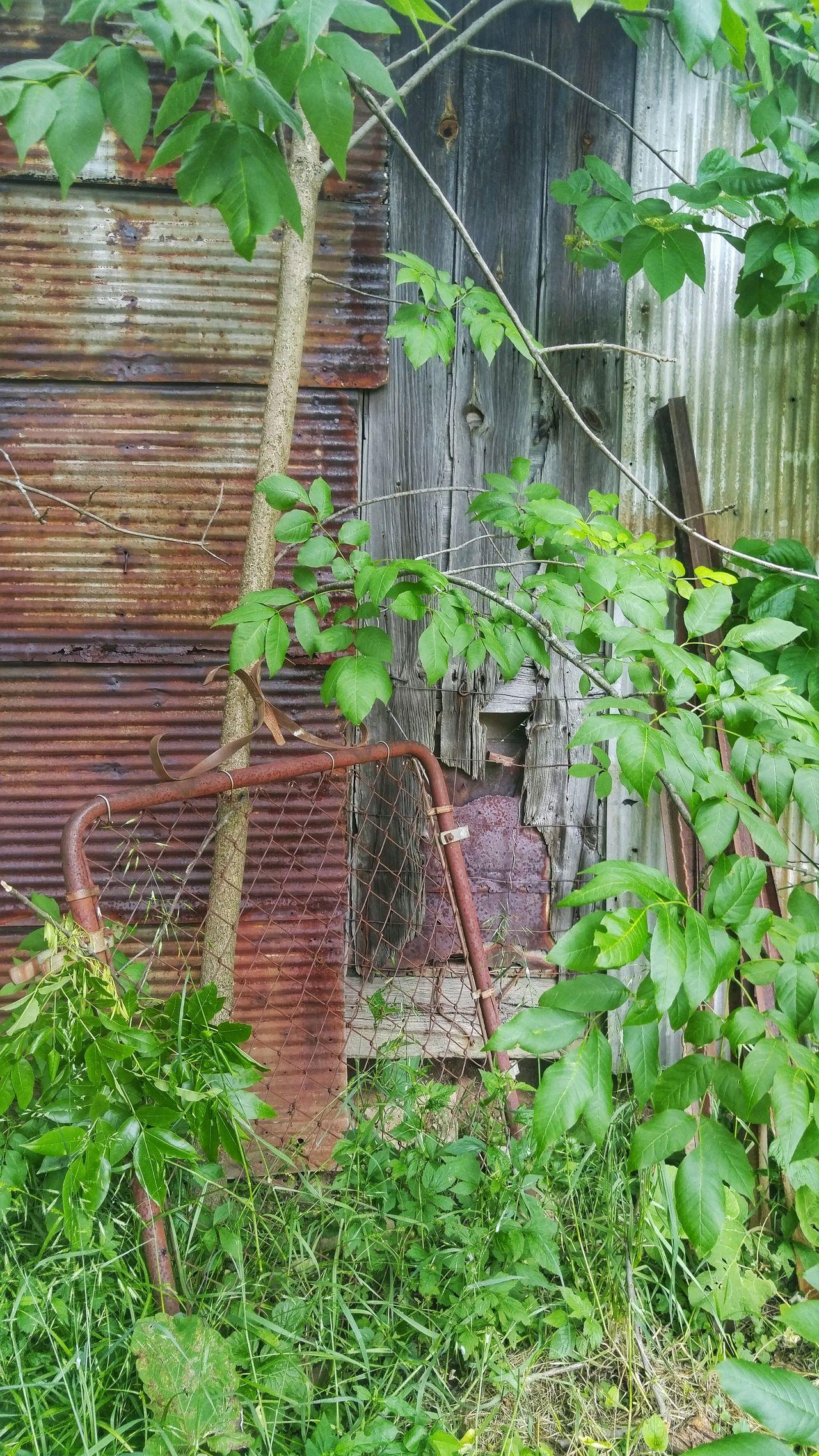 Grove City, Ohio Grove City, Oh Columbus, Ohio Columbus Ohio Barn Fence Fence Gate Rust Foliage Ivy Ivy Leaves Abandoned Abandoned Barn