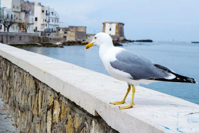 In Trapani, Italy Taking Photos Seagull Sea View Enjoying Life Open Edit Fresh 3 Eye4photography  EyeEm Best Shots Showcase April Landscape_Collection Nature_collection