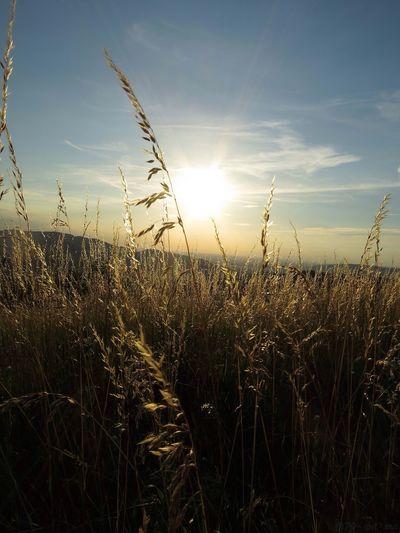 Sunset Sonne Liestal Lindenstock