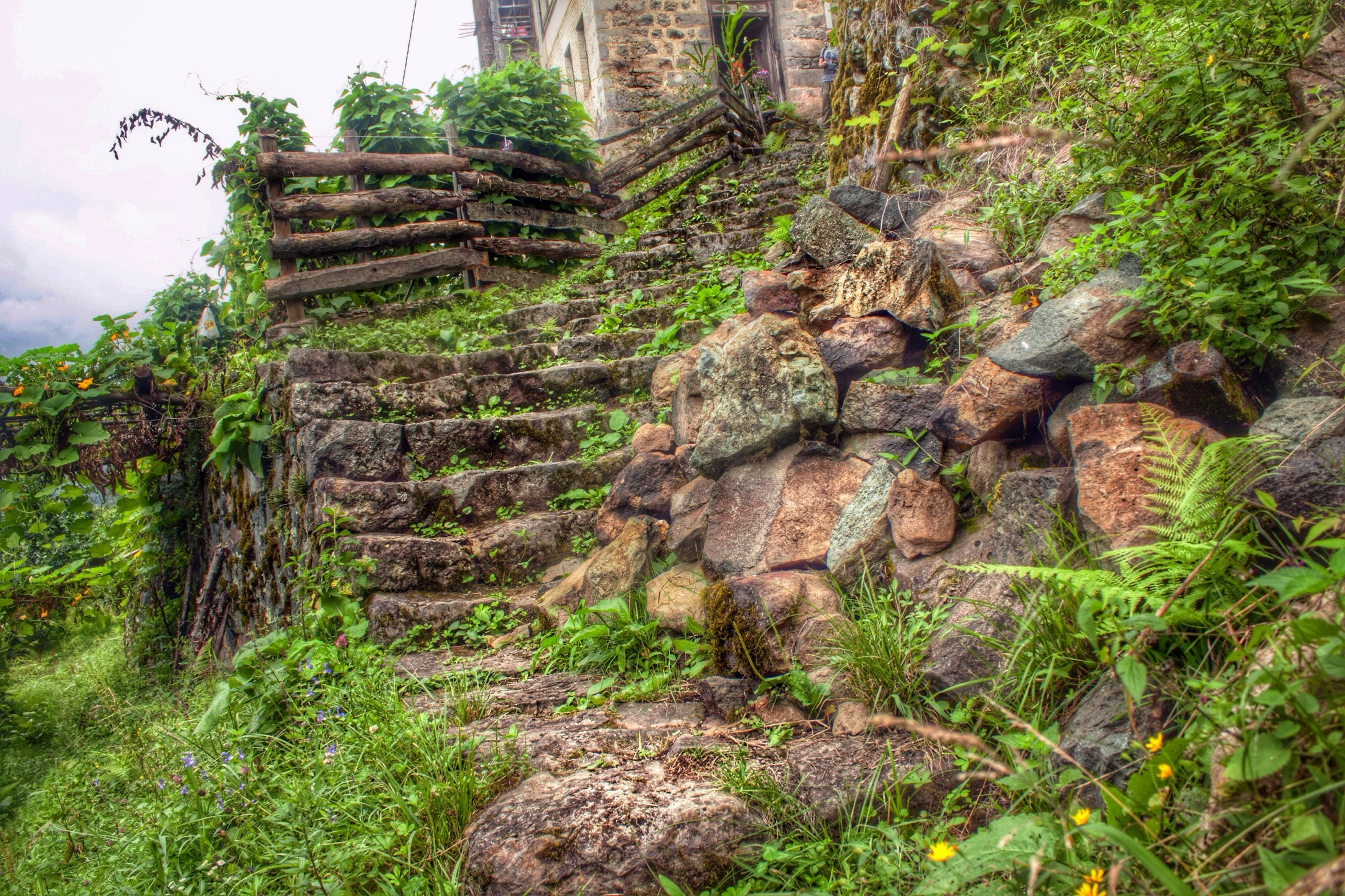 built structure, architecture, grass, plant, building exterior, old, tree, growth, sky, damaged, green color, old ruin, weathered, stone wall, abandoned, nature, tranquility, low angle view, run-down, day