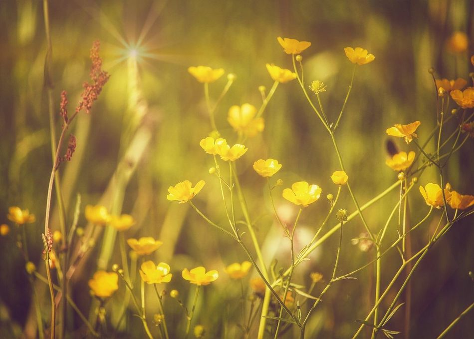Growth Nature Plant Yellow No People Outdoors Flower Beauty In Nature Day Close-up Grass Freshness