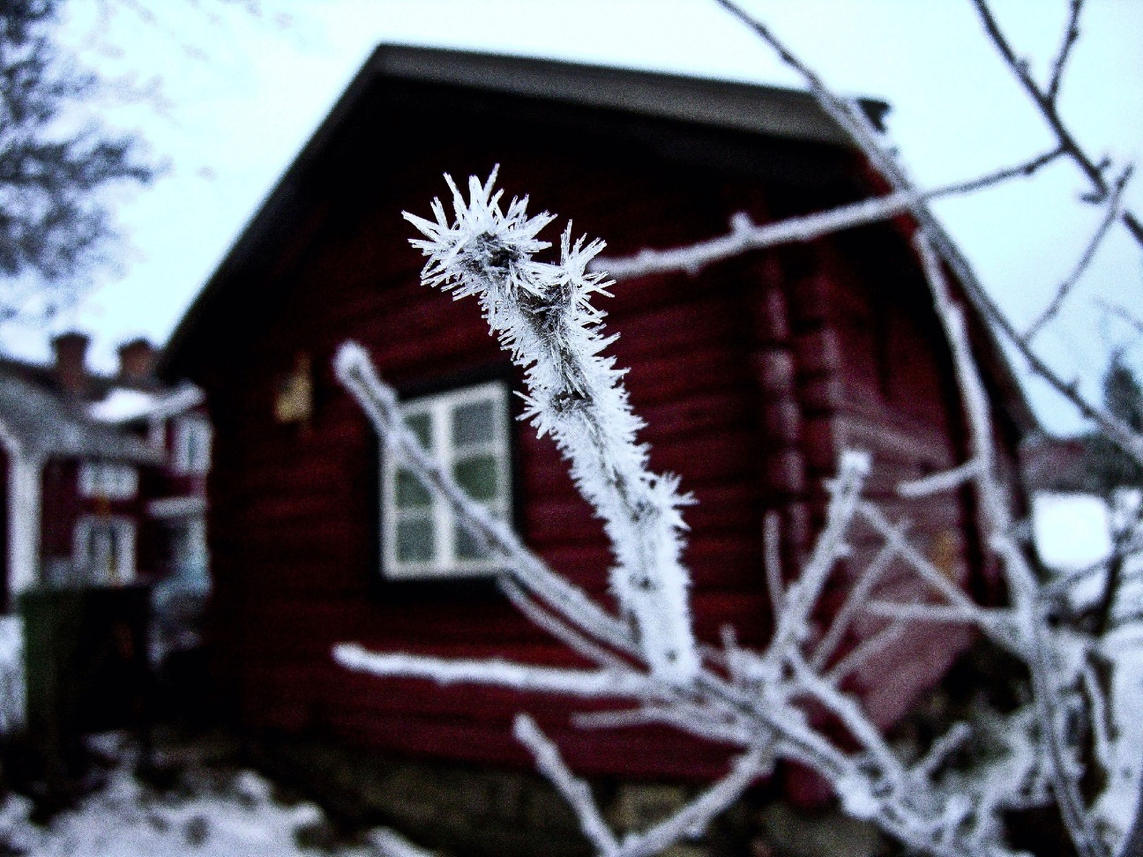 building exterior, architecture, built structure, low angle view, house, sky, tree, bare tree, winter, growth, day, nature, outdoors, plant, snow, branch, no people, window, residential structure, focus on foreground