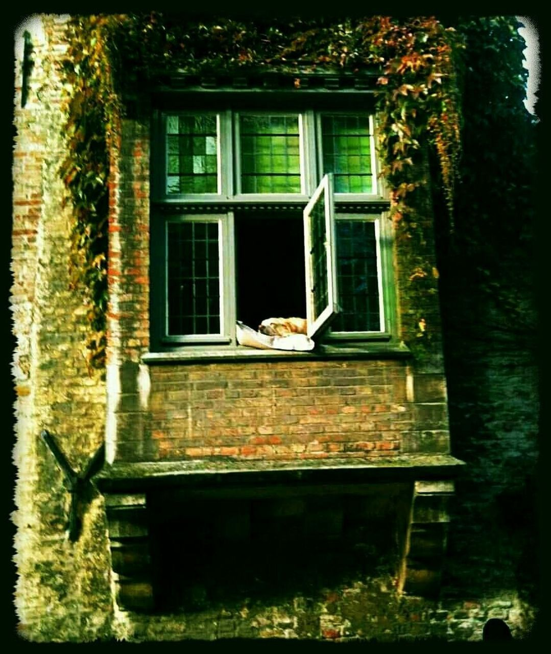 architecture, built structure, window, no people, day, building exterior, animal themes, outdoors, one animal, animals in the wild, tree, nature, bird, close-up