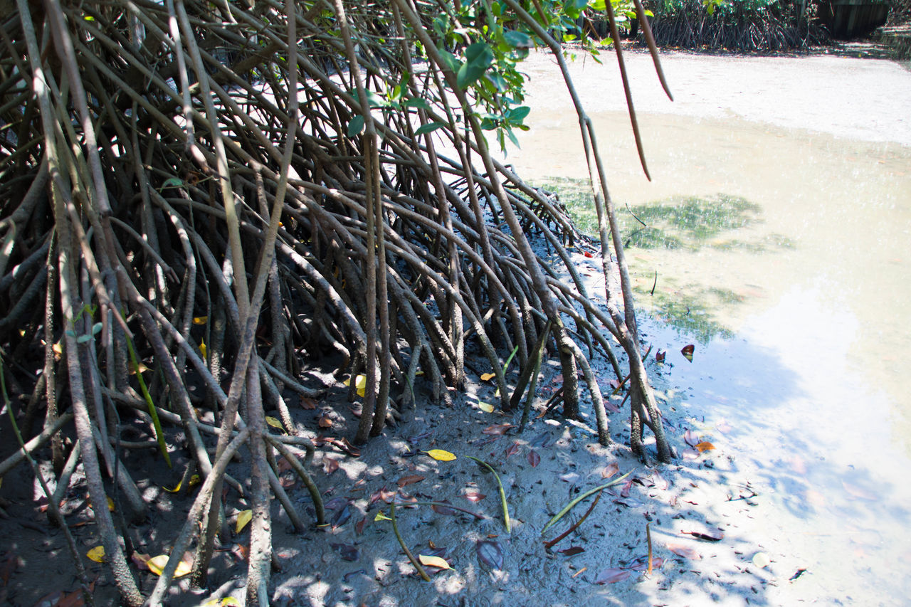 Day Grass Growth Mangroves Nature No People Outdoors Tree