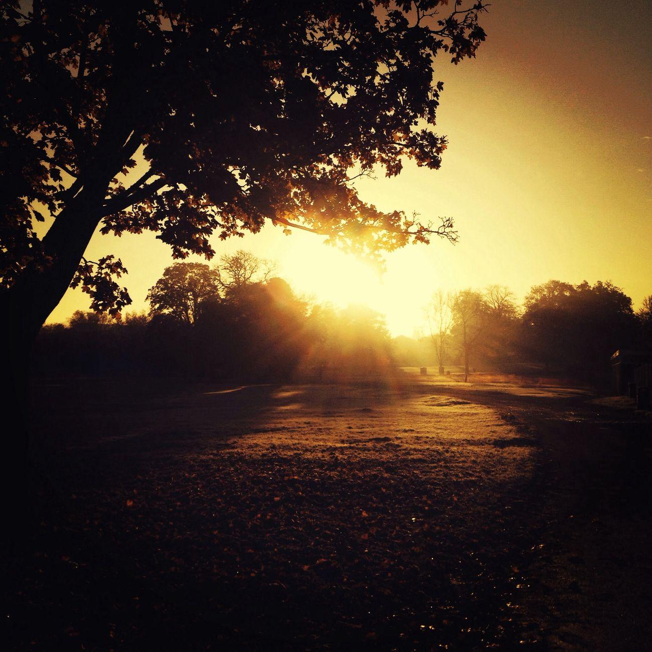 Glaring Trees Landscape Silhouette Vscocam