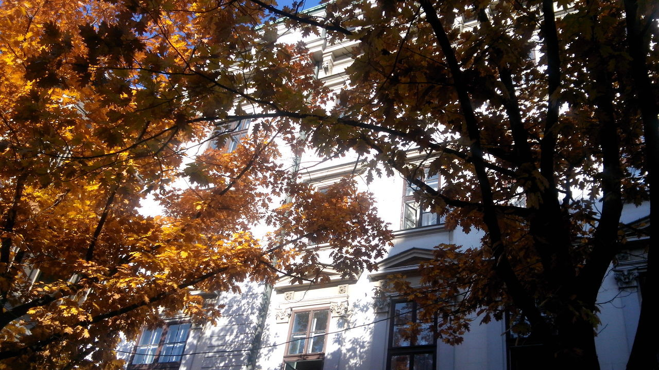 Architecture Autumn Autumn Afternoon Autumn Colors Autumn In Belgrade Autumn Sunlight Beauty In Nature Branch Building And Trees In Autumn Building Exterior Built Structure Day Growth House Leaf Lights And Shadows Low Angle View Nature No People Old Belgrade Old Center Of Belgrade Outdoors Sky Tree White Building