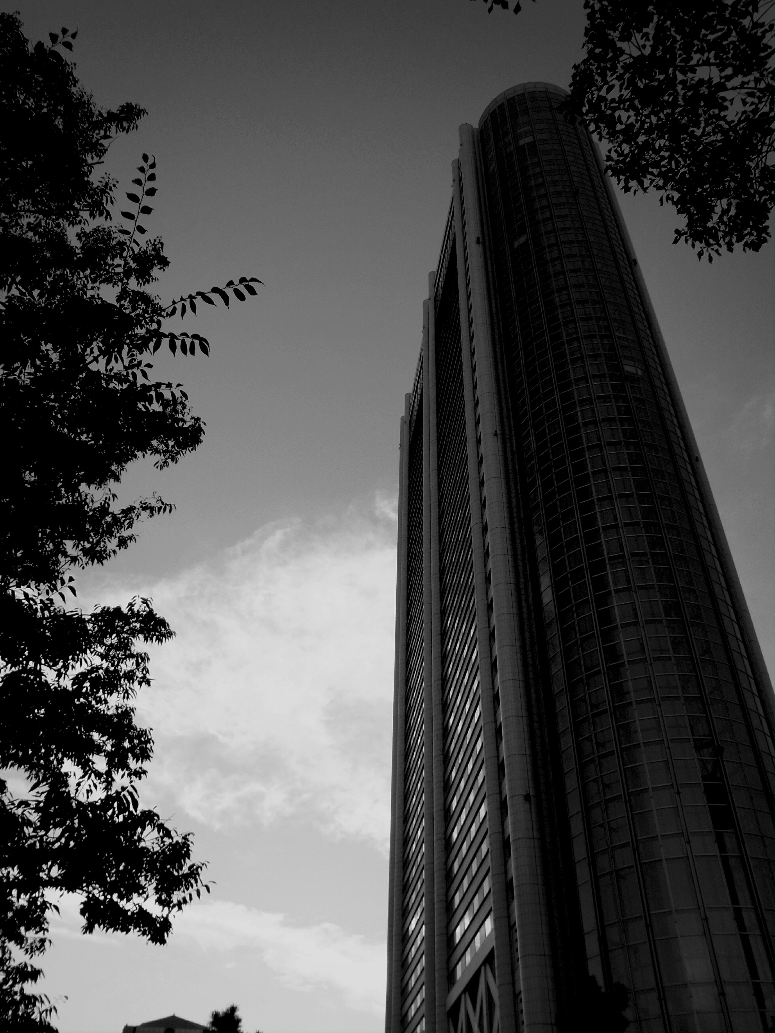 low angle view, architecture, building exterior, built structure, tree, sky, city, tall - high, skyscraper, branch, building, growth, outdoors, cloud - sky, tower, day, no people, modern, office building, cloud