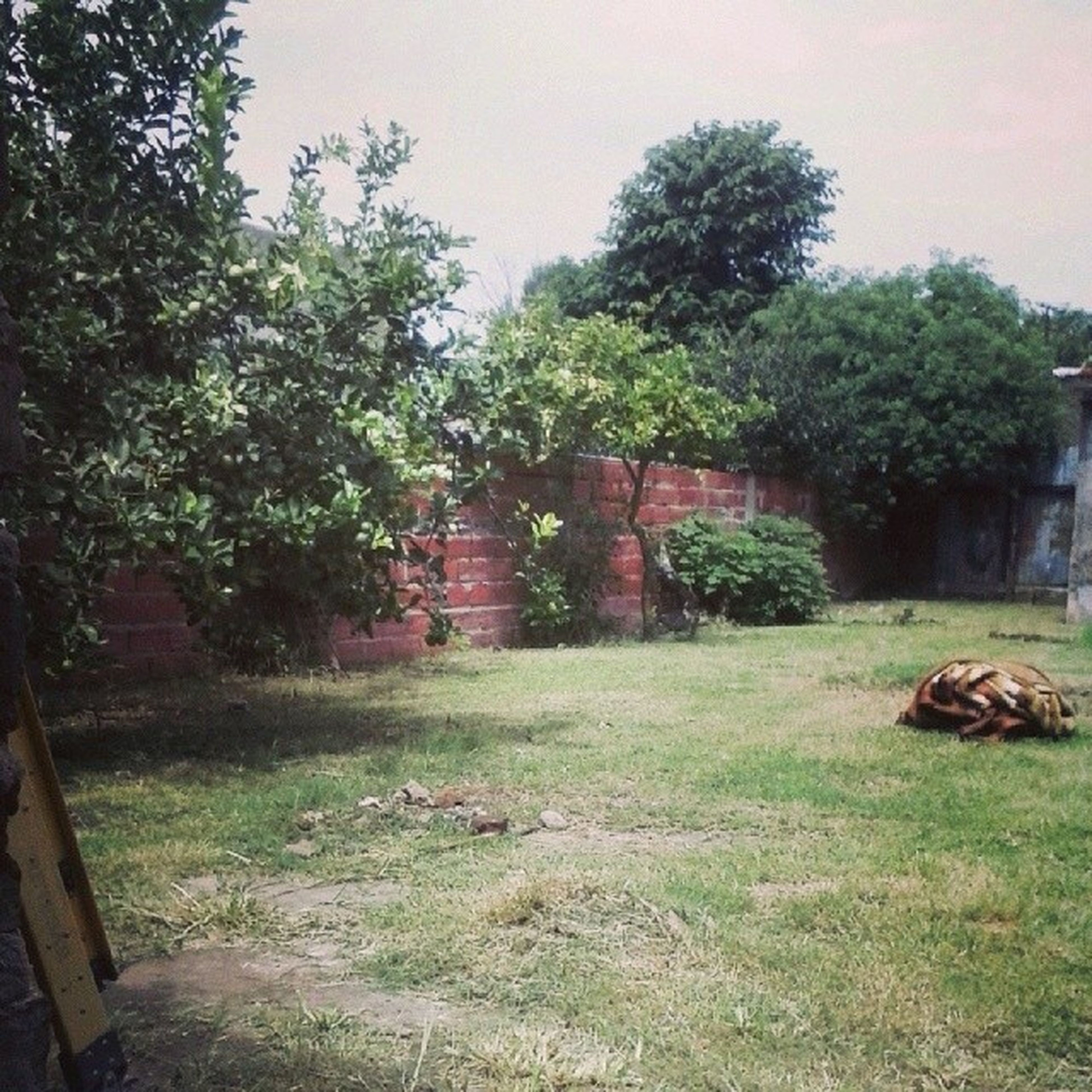 tree, grass, built structure, growth, green color, architecture, plant, house, field, nature, tranquility, grassy, building exterior, day, no people, abandoned, outdoors, tranquil scene, landscape, wood - material