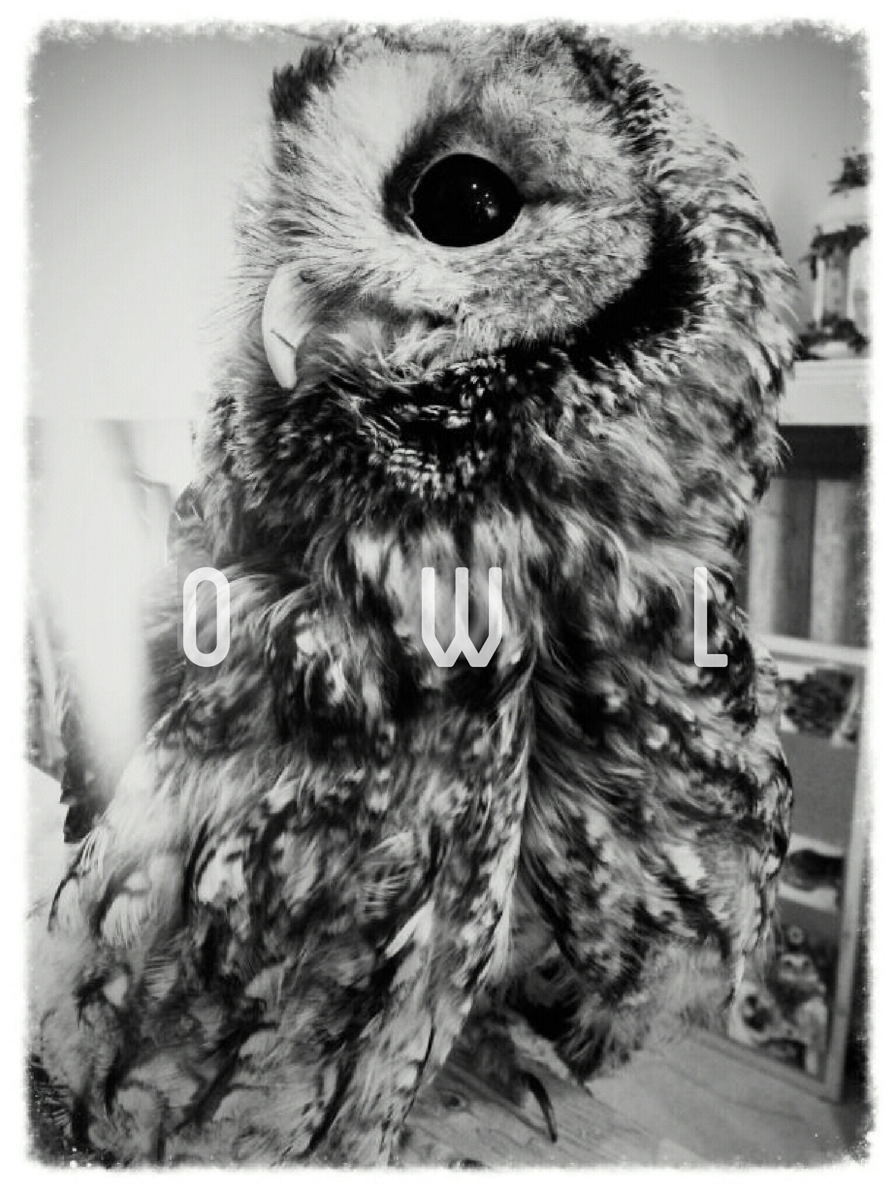 transfer print, auto post production filter, animal themes, one animal, portrait, looking at camera, pets, indoors, domestic animals, close-up, bird, front view, animal head, animal representation, no people, day, wildlife, animal hair, mammal