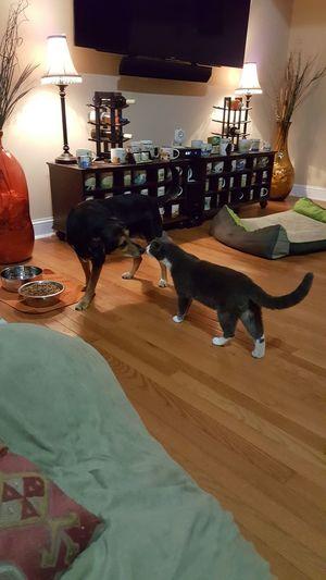 Home Interior Feline Domestic Cat No People Indoors  Animal Themes Dog Beagles Of Eyyem Beagle Dog