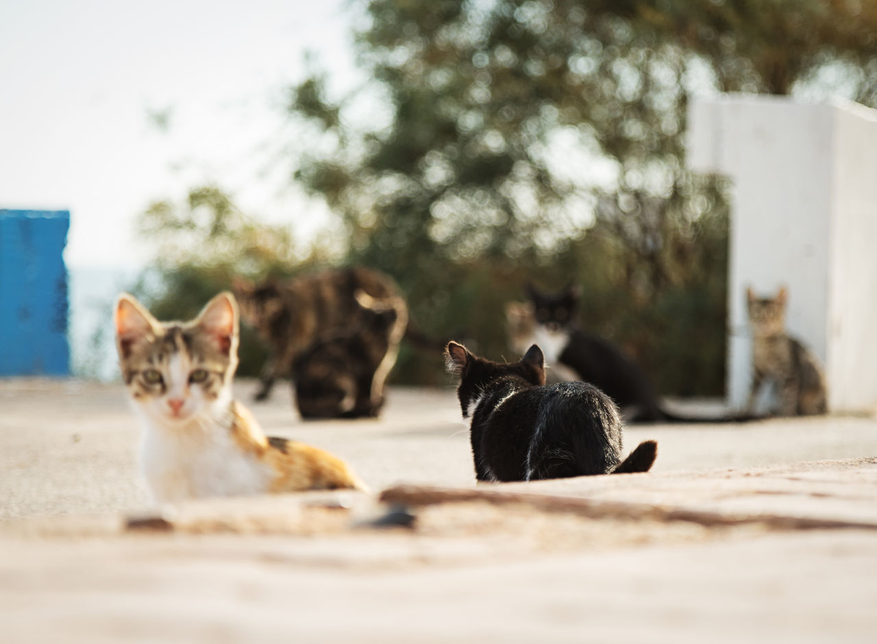Street Cats Animal Themes Boulder Cats Coastline Day Domestic Animals Feline Feline Portraits Focus On Foreground Mammal Mersin Turkey No People Outdoors Pets Rock Formation Street Cats