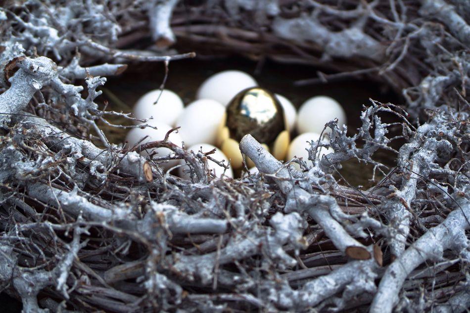 Animal Nest Outdoors Bird Nest Close-up Beginnings New Life Eggshell Spring Time Wood - Material Easter Eggs Easter White Eggs Eggs In The Nest Easter Ready Golden Egg Animal Themes