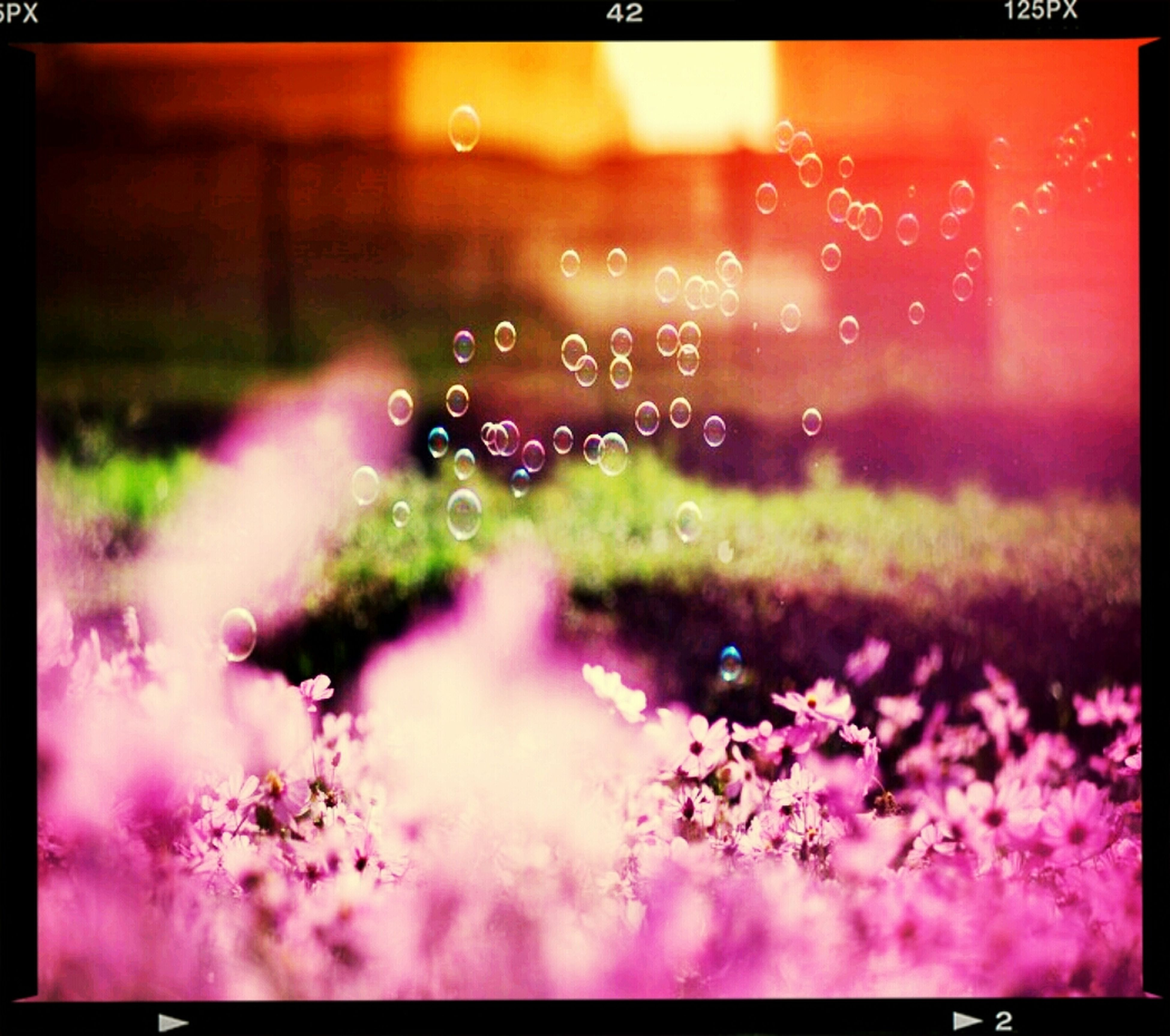 flower, transfer print, freshness, fragility, pink color, auto post production filter, drop, growth, focus on foreground, nature, wet, water, beauty in nature, plant, close-up, rain, transparent, outdoors, season, window