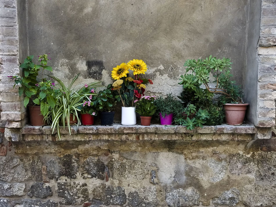 Potted flowers in stone window sill Architecture Beauty In Nature Building Exterior Built Structure Day Floral Flower Fragility Growth Nature No People Outdoors Plant Potted Flowers Potted Garden Potted Plants Pretty Quaint Perspective Rustic Style Stone Wall Sunflower Sunflowers Window Window Sill Window Sill Garden