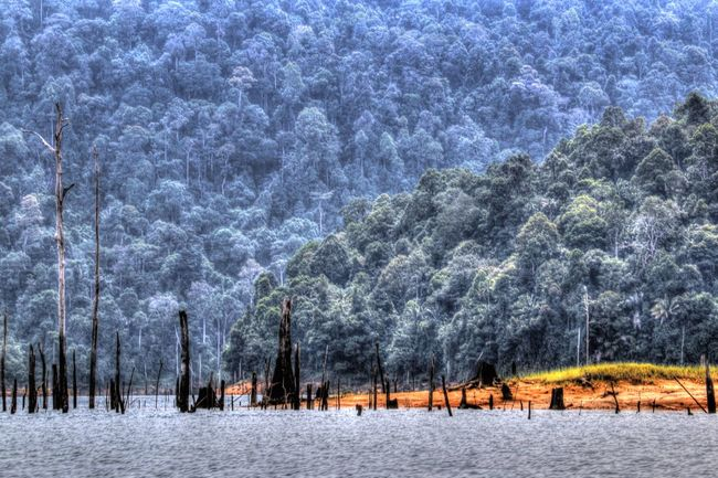 Kenyir Lake is the largest man-made lake in South-East Asia. Covering an area of 260,000 hectares, it is home to some 300 species of freshwater fishes Beautiful Beauty In Nature Beauty In Nature Dead Trees Haunting  Kenyir Kenyir Lake Malaysia Nature Outdoors Terengganu Tranquil Scene Tranquility Tree