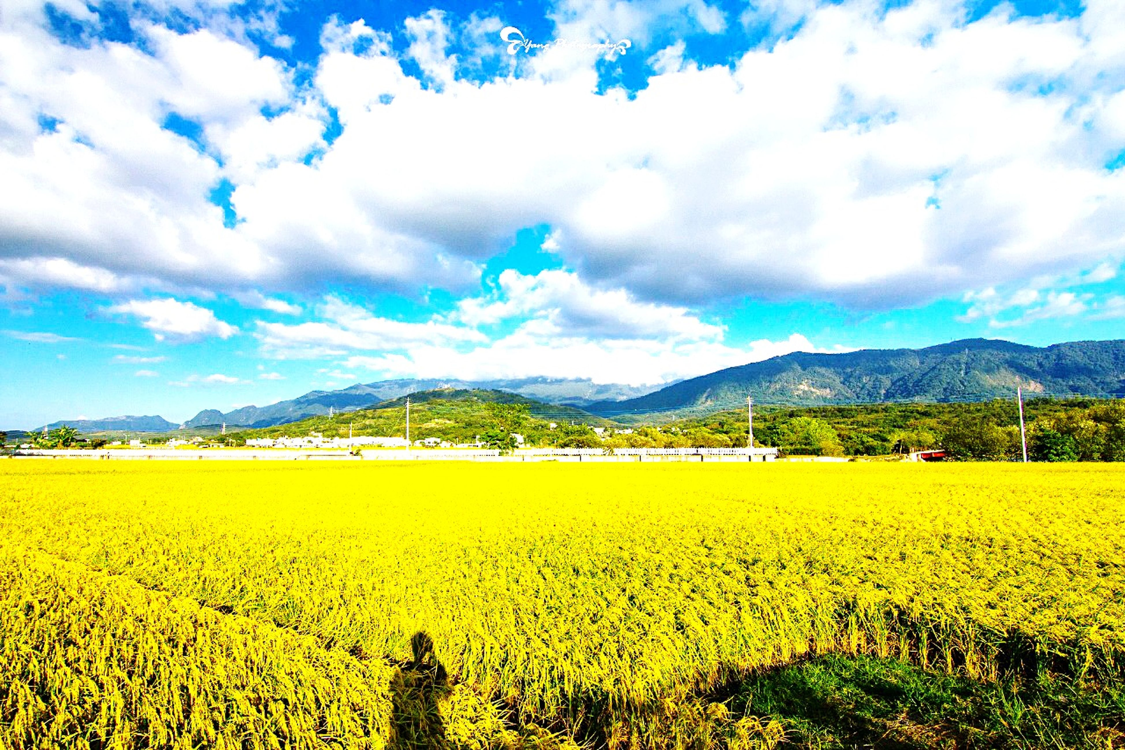 mountain, sky, landscape, tranquil scene, beauty in nature, yellow, scenics, tranquility, mountain range, cloud - sky, flower, field, cloud, nature, rural scene, growth, agriculture, cloudy, blue, idyllic