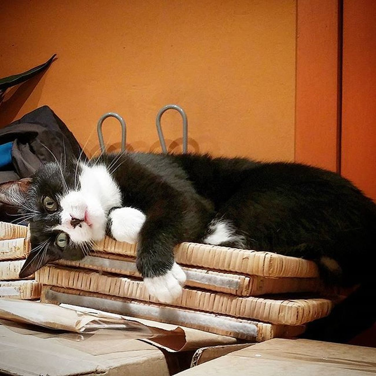 Relax Turin Sanslavario Ig_cats Instacats Photographer Photooftheday Picoftheday Animalphotography Sguardo  Dolcezza Amareigatti Catsgram Catsofinstagram Buongiornotorino Momentidolci