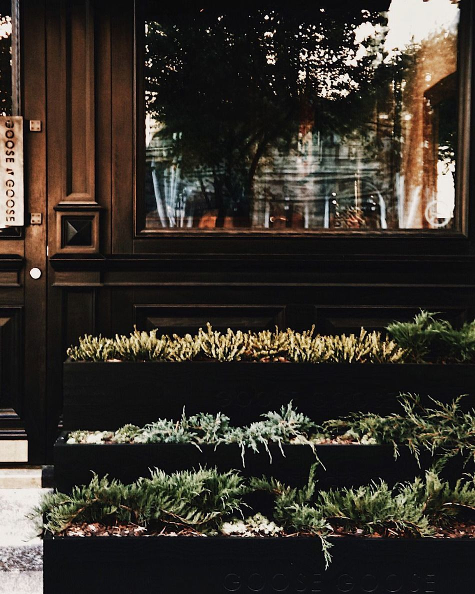 Plant Window Growth Flower Nature Day No People Tree Outdoors Architecture Built Structure Building Exterior Close-up Beauty In Nature Window Box